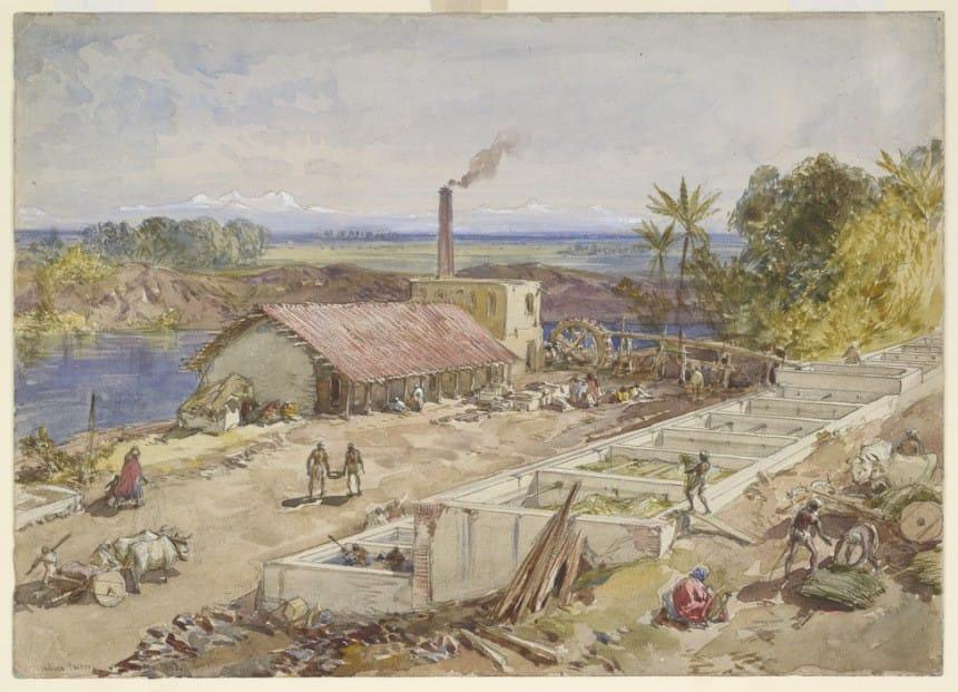NATURAL INDIGO DYE INTERESTING GLOBAL HISTORY IN BRIEF
